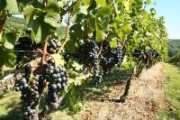 Loudoun County Wineries